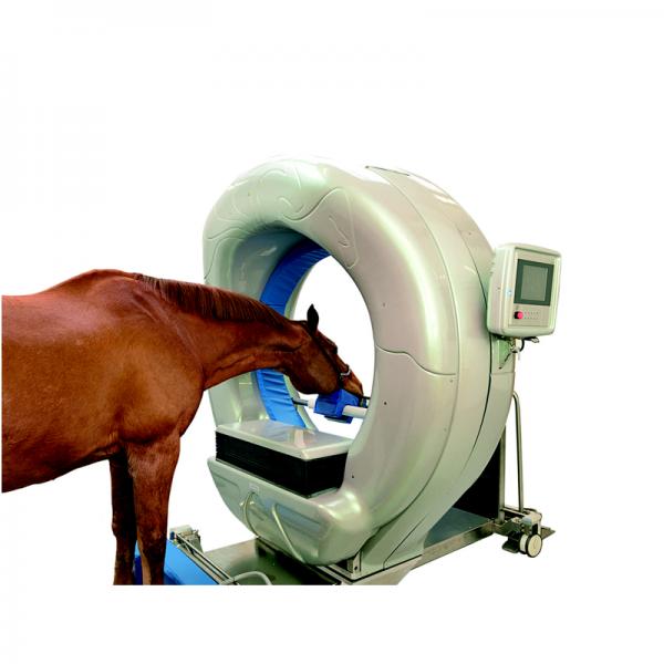 Computertomograph Pferd